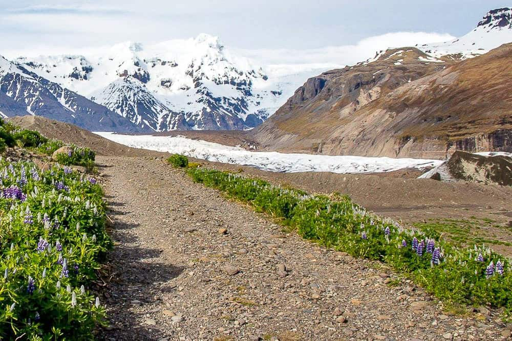 One of the trails to Svinafellsjokull from Hotel Skaftafell